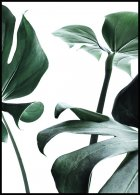 Monstera no. 1 Poster