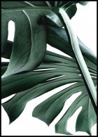 Monstera no. 2 Poster