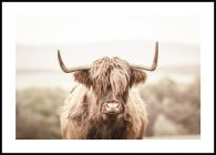 Brown Highland Cow Poster