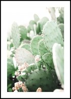 Prickly Pear Cactus Poster