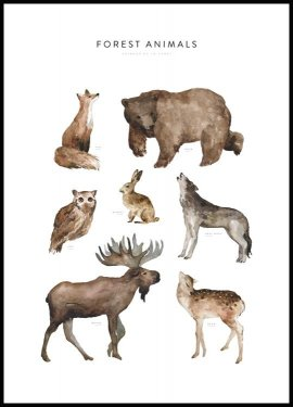 Forest Animals Poster
