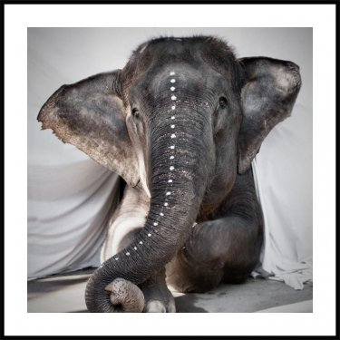 Love Warriors Elephant Adele Poster