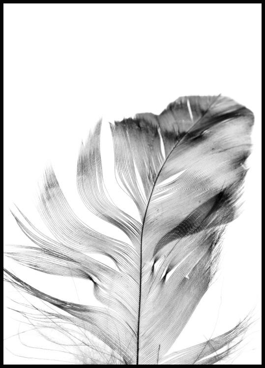 Feather Poster